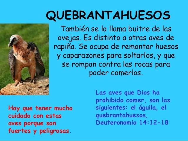 abc animales de la biblia pdf