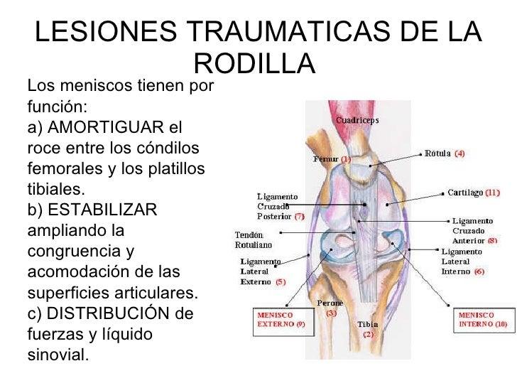 articulacion de la rodilla pdf