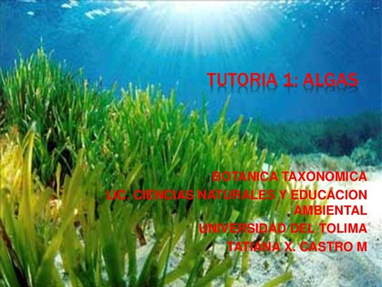 clasificacion de las algas pdf