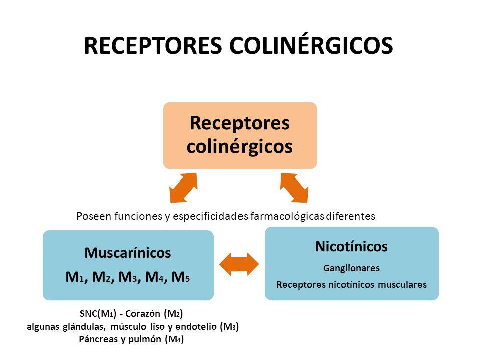 acetilcolina y su receptor nicotínico pdf
