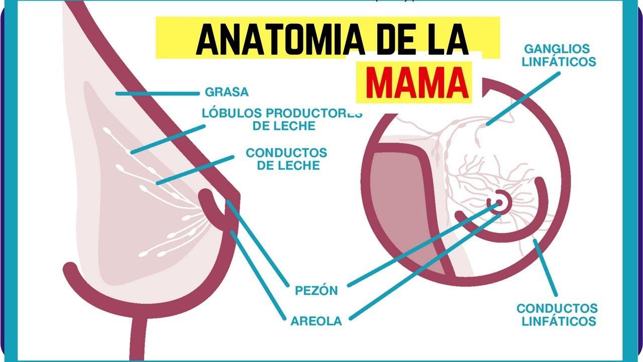 anatomía de la vagina pdf
