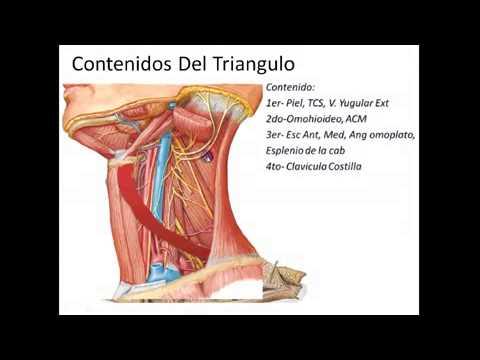 anatomia topografica de cabeza y cuello pdf