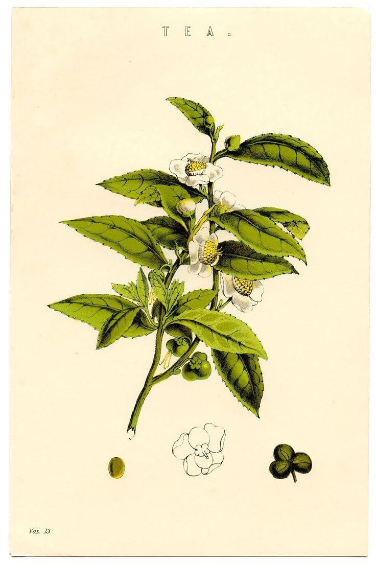 botanical illustration pdf books download
