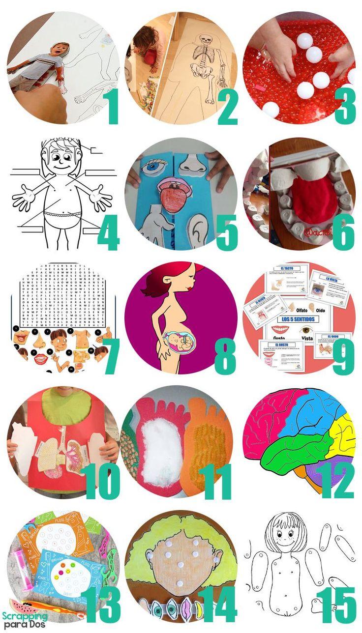 cuerpo humano actividades para niños pdf