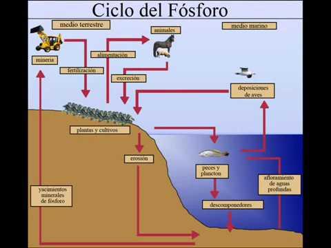ciclo del fosforo y azufre pdf