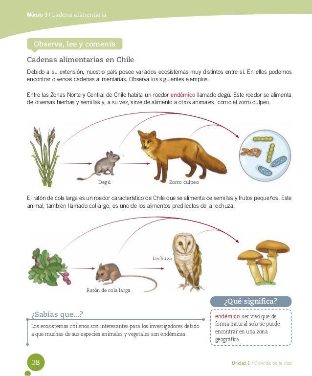 animales endemicos de chile pdf