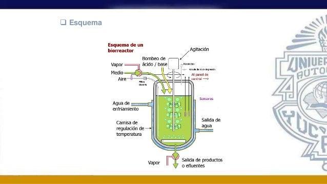 bioquímica stryer berg tymocz pdf