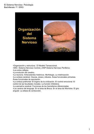 anatomía y fisiología del sistema nervioso pdf