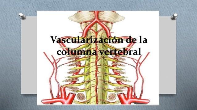 columna vertebral plexos y nervios pdf