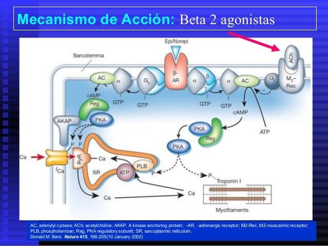 broncodilatadores beta 2 agonistas pdf
