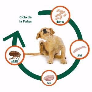 condiciones legales para instalar un hotel de perros