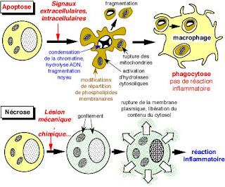 biologia celular alberts capitulo 13 pdf