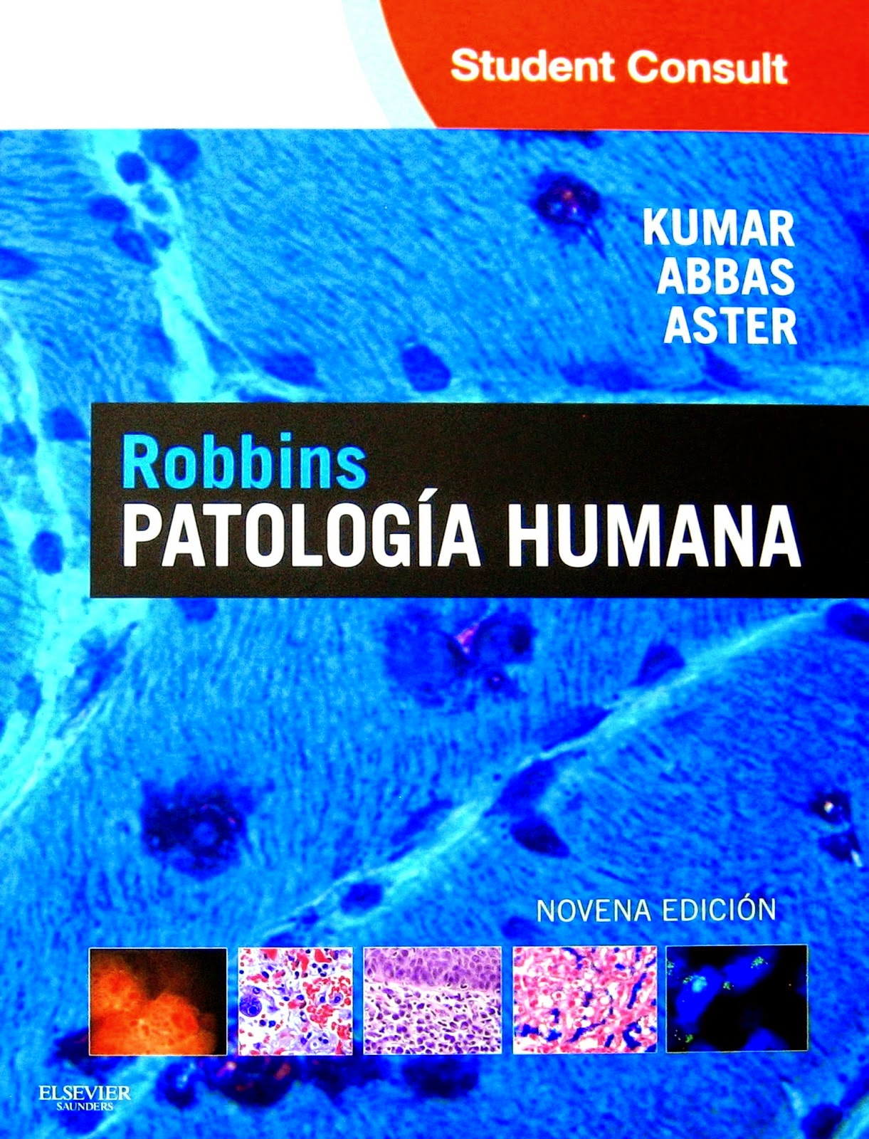 abbas inmunologia 8 edicion pdf booksmedicos