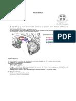 aprendizaje sensoriomotor voz pdf marcos guzman