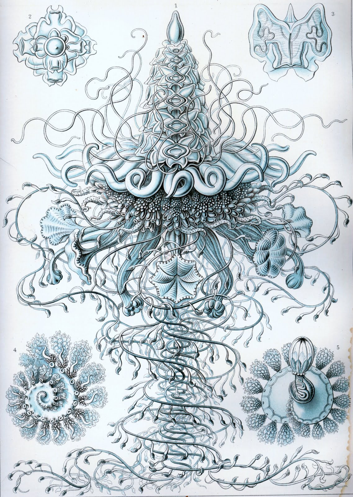 art forms in nature haeckel pdf