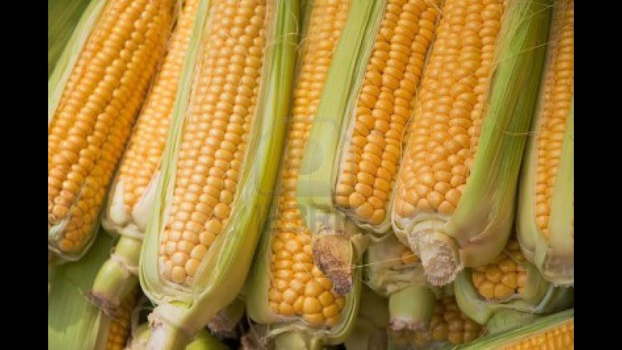 beneficios almidon de maiz pdf