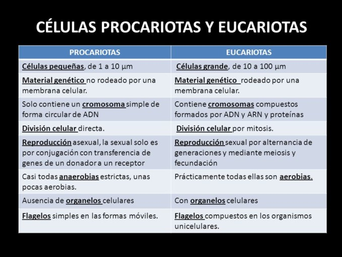 celula eucarionte y procarionte similitudes biologia pdf