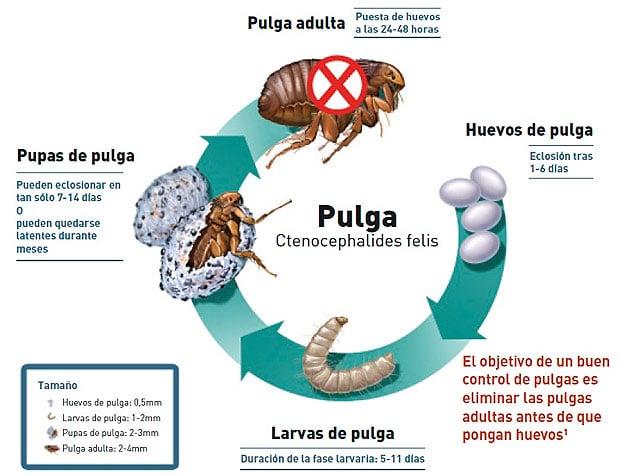 ciclo biologico de las garrapatas chile pdf