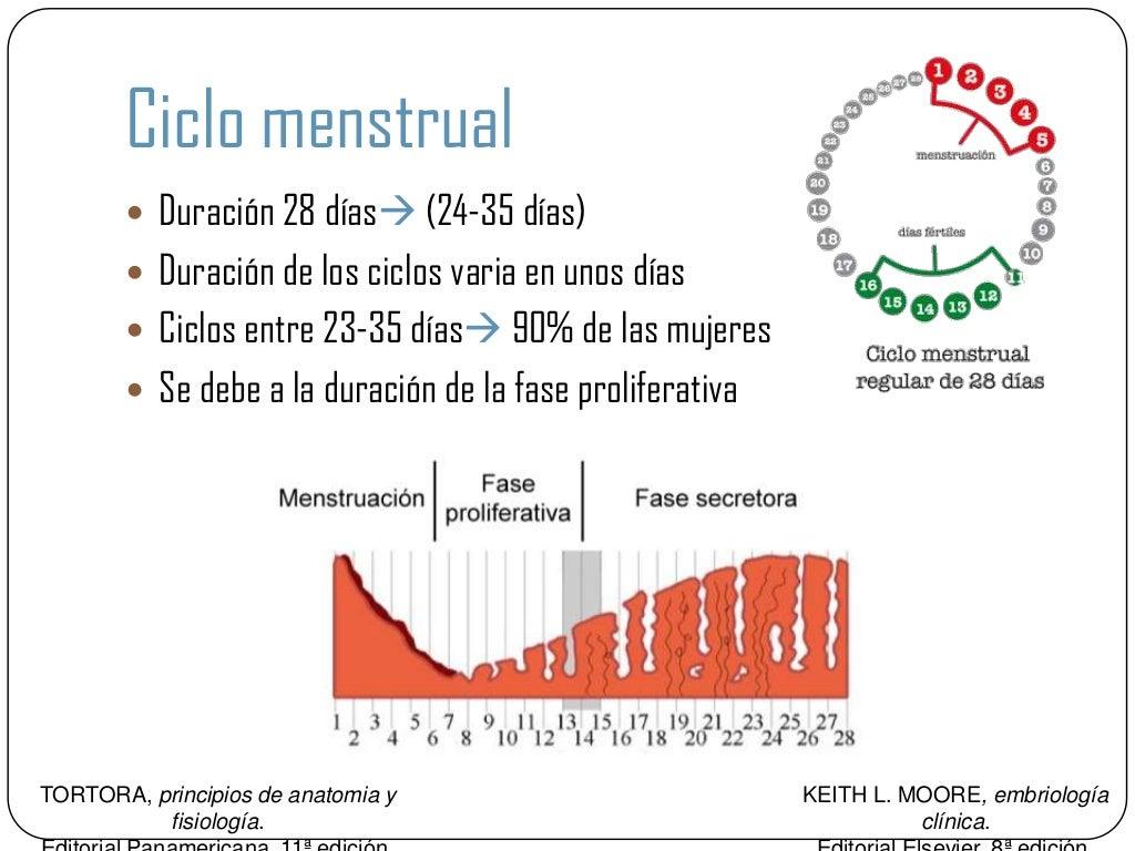 ciclo del embarazo pdf resumen