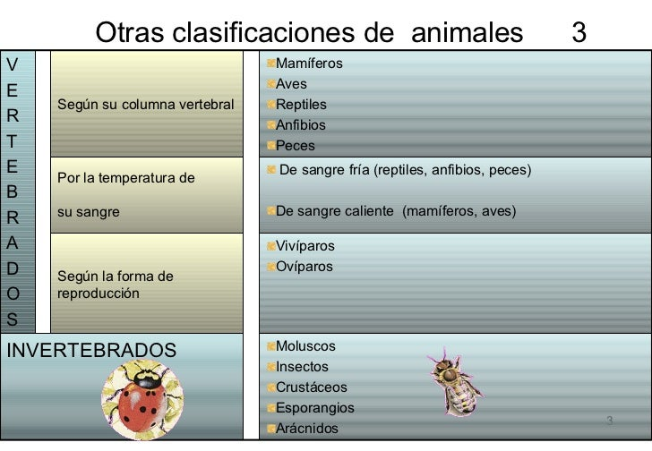 clasificacion de los peces pdf