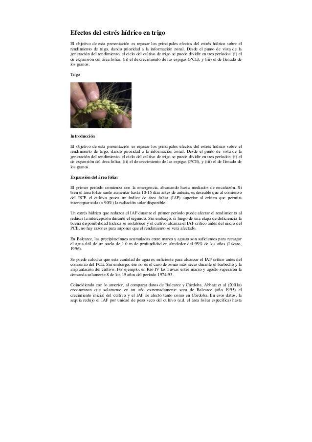 condiciones de estres hidrico en plantas de espcino
