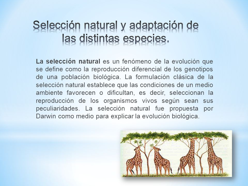 condiciones de la seleccion natural