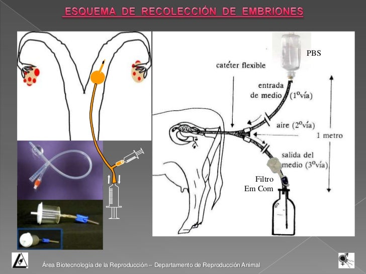 criopreservacion de embriones en chile pdf