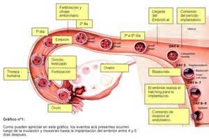 cuerpo de embarazada sin embrion pdf