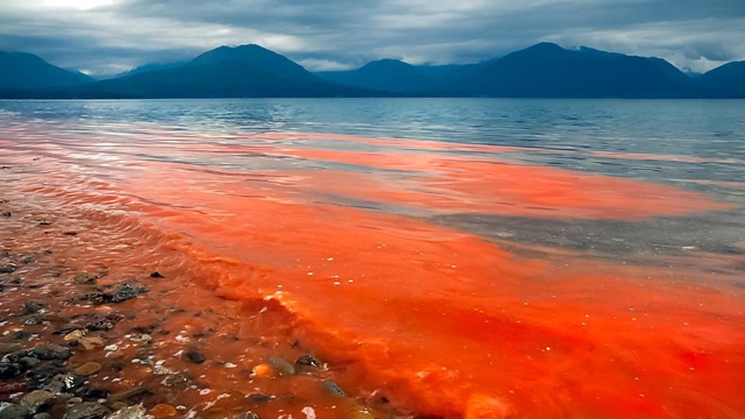 condiciones para que se de la marea roja